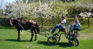 A cart ride around El Dalmau